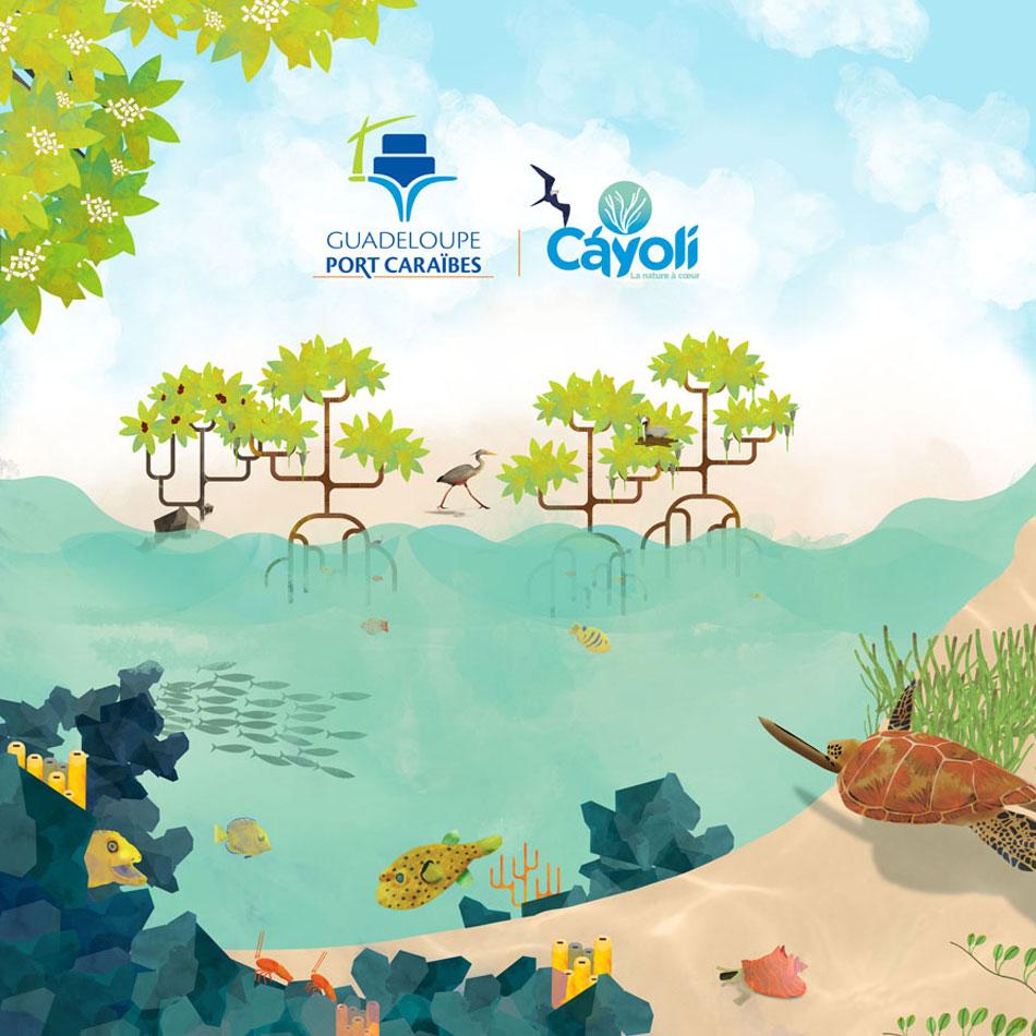 Illustration faune et flore marine de Guadeloupe