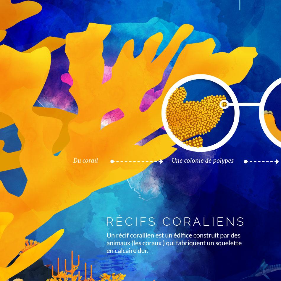 Planches éducatives sur les coraux