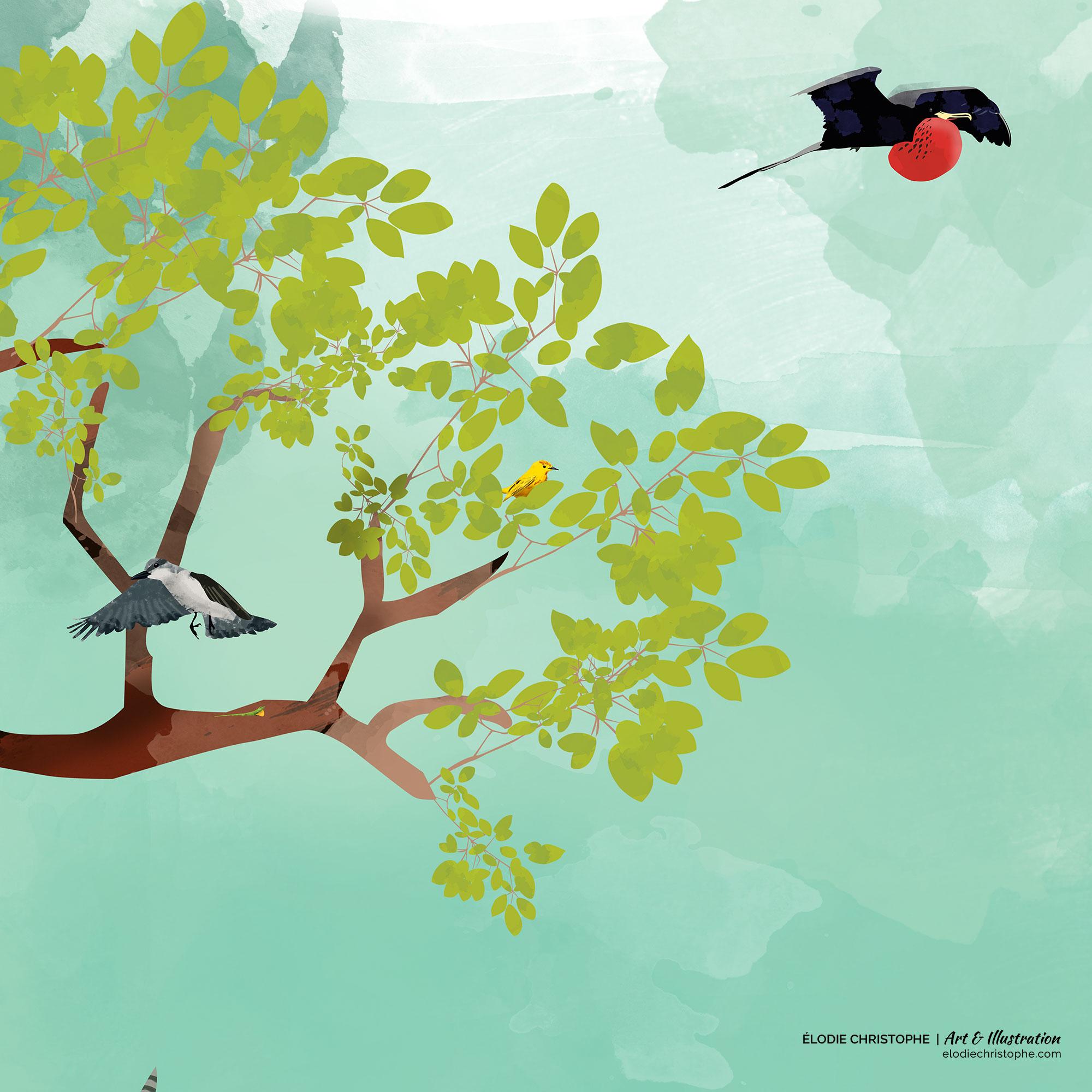 Illustration panneaux éducatifs Onf guadeloupe